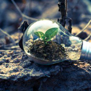 Das Bild zeigt eikne Glühbirne, in der eine gründe Pflanze gedeiht.